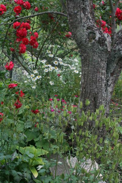 rosesetarbre.jpg
